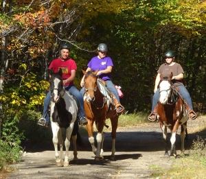 Horses, Oct 2016