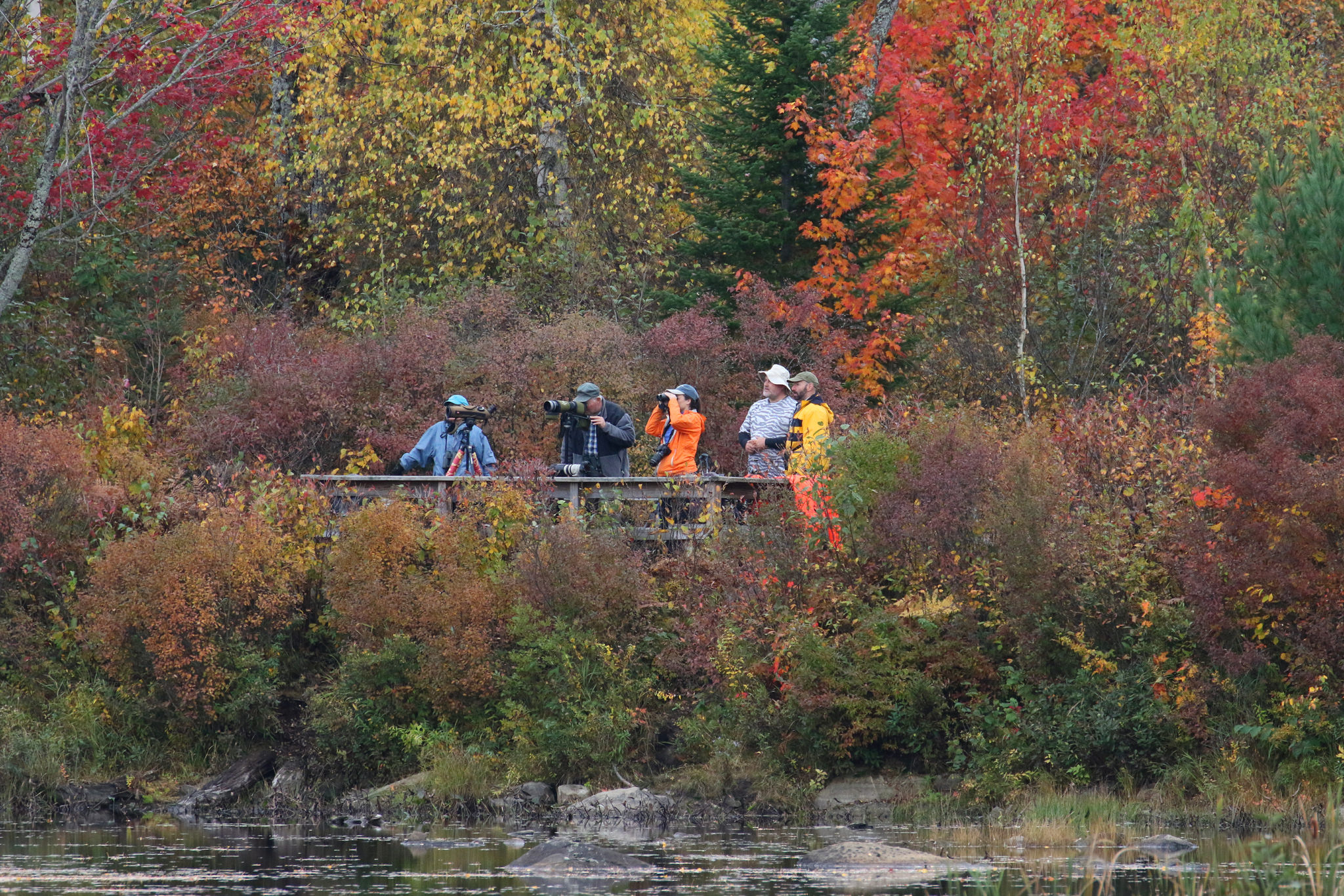 Cherry Pond viewing platform